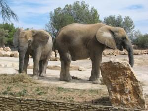 Elefantes comiendo.